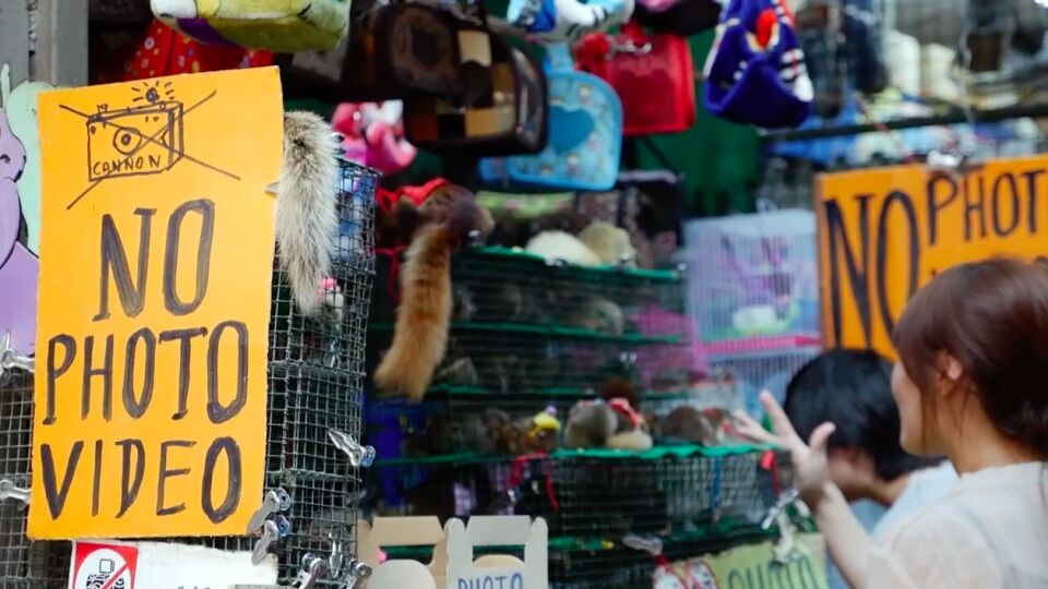 DDC verwerpt suggestie dat de Chatuchak-markt in Bangkok de oorsprong van Covid-19 zou kunnen zijn
