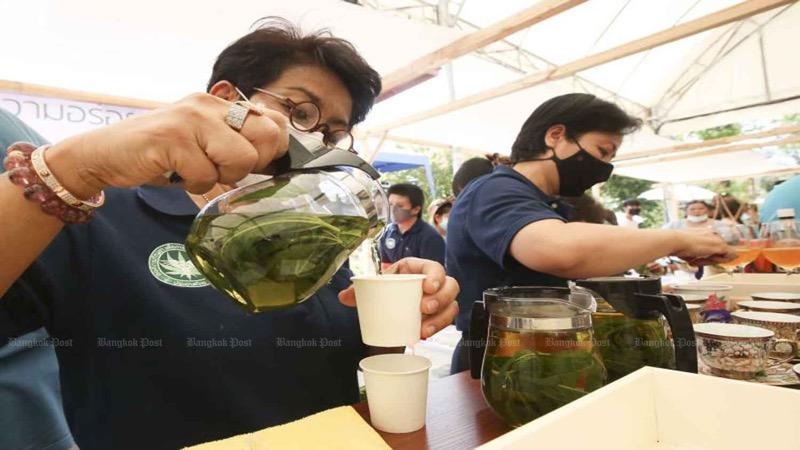 Thailand wordt een cannabis vriendelijk land nu de bladeren van de lijst met verdovende middelen zijn verwijderd