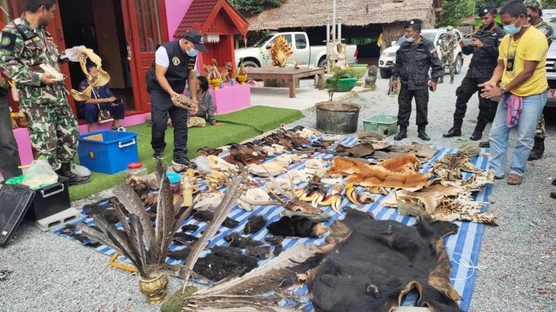 Thaise man in Phatthalung gearresteerd met karkassen van beschermde dieren in zijn bezit