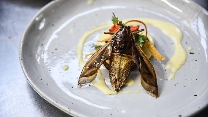 De eetbare insecten van Thailand gaan de wereldmarkt veroveren