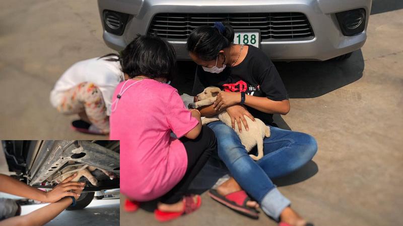 Puppy bekneld in auto overleeft lange rit door Bangkok