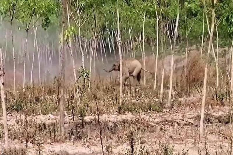 VIDEO | Olifantenjong valt dierenartsen aan die gewonde moeder willen helpen