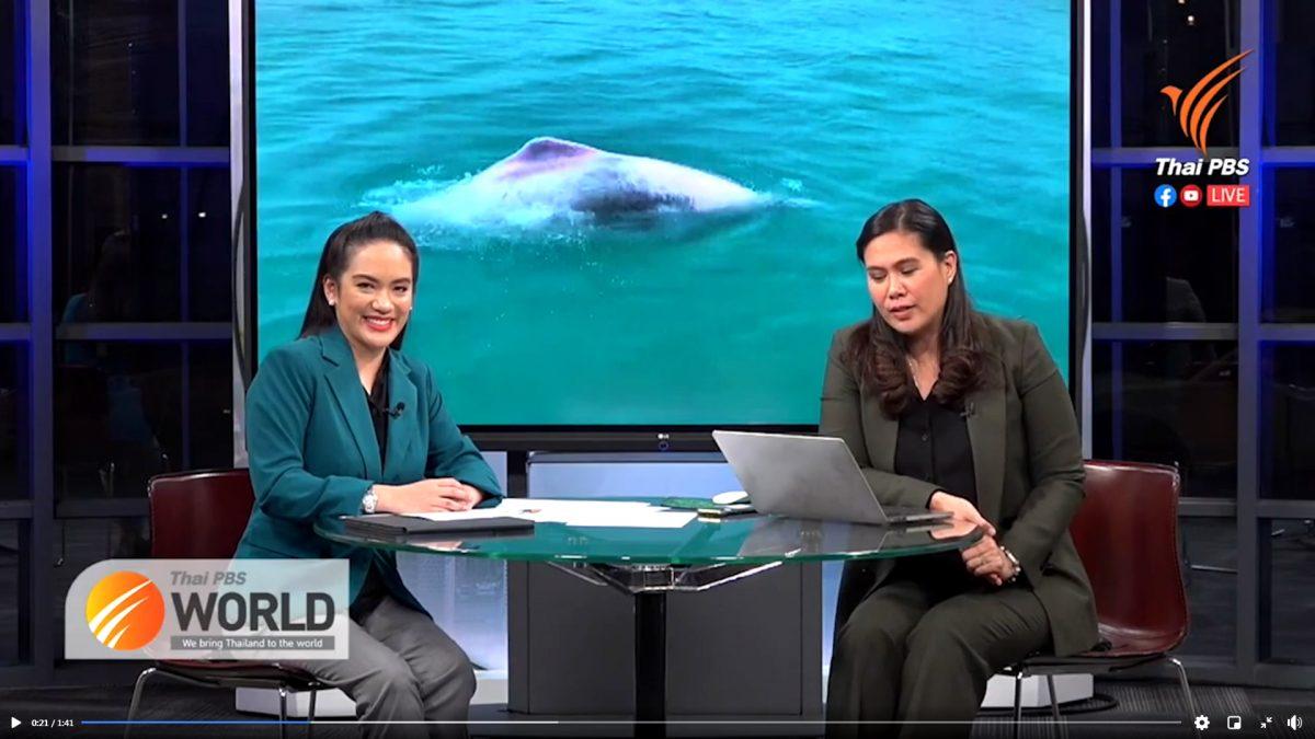 Video: zeldzame roze dolfijnen gespot in Nationaal Park Mu Ko Ang Thong