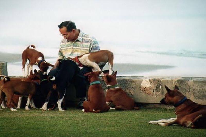 Van standbeeld tot op een postzegel, zo dol zijn Thaise koningen op hun honden