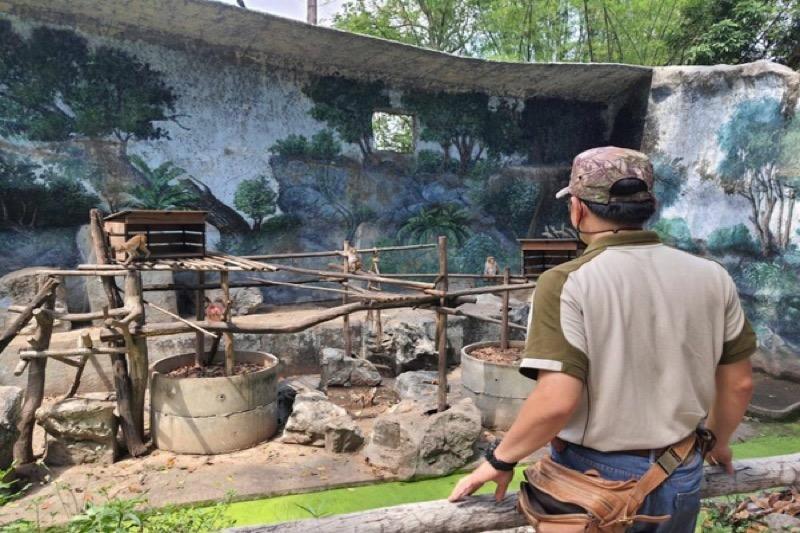 125 dieren in Chiang Mai Zoo gecontroleerd nadat een stagiair positief op het Covid virus getest werd
