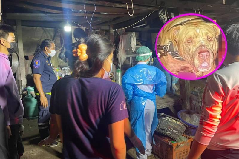 UPDATE | Eigenaar overleden na door zijn pitbull in Pattaya te zijn aangevallen