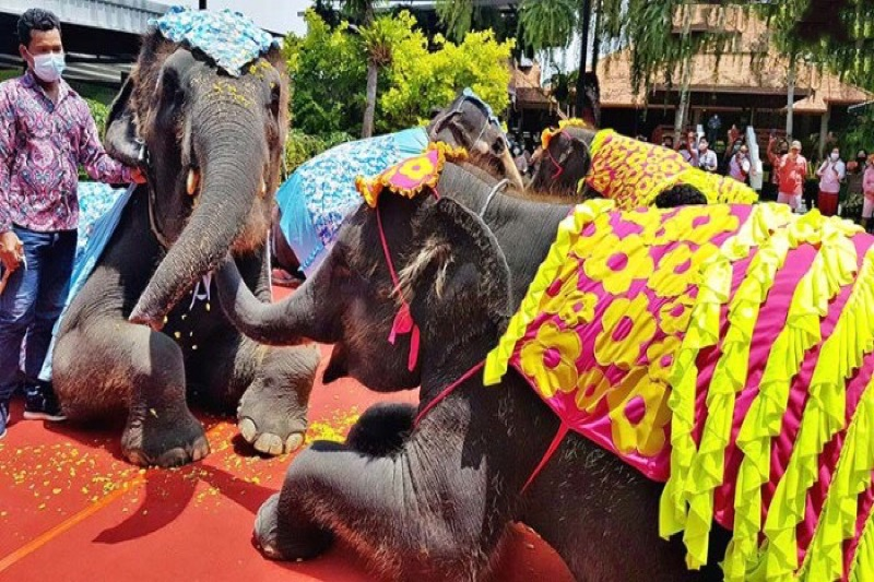 De olifanten van de Nong Nooch tuinen nabij Pattaya zorgden voor een Songkran-spektakel