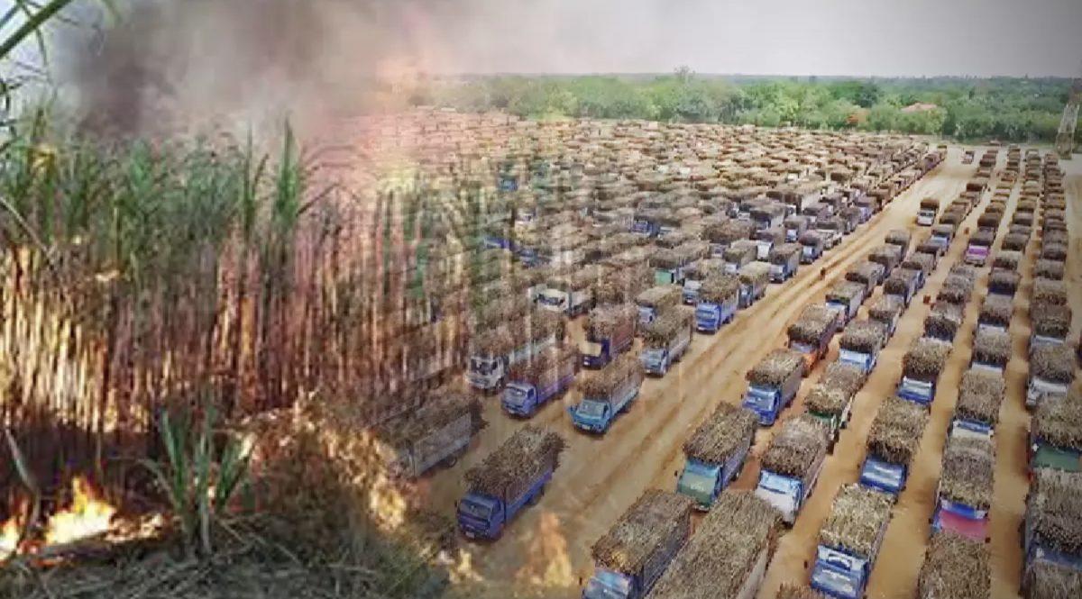 Het Thais kabinet keurt subsidie van 6 miljard baht goed om het verbranden van suikerrietvelden verder te verminderen