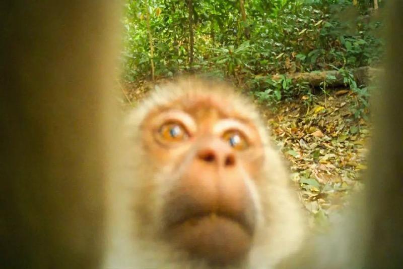 Bewegingscamera's bieden inzicht in dieren in het wild in het reservaat