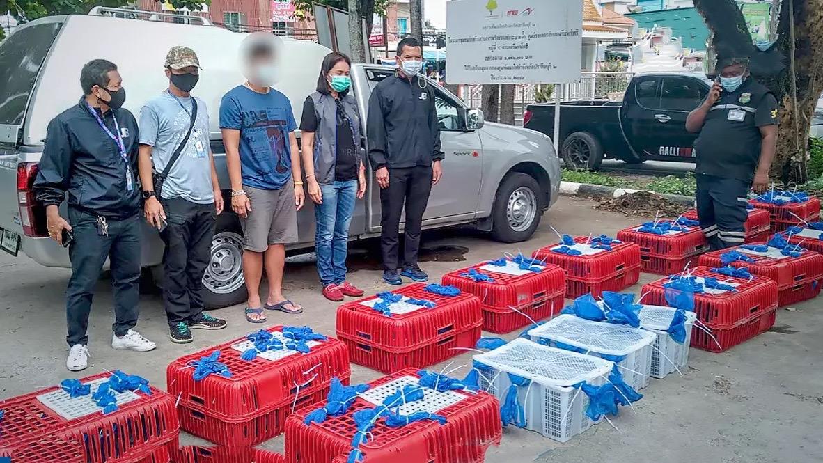 Thaise man gearresteerd voor het smokkelen van meer dan 100 wilde apen