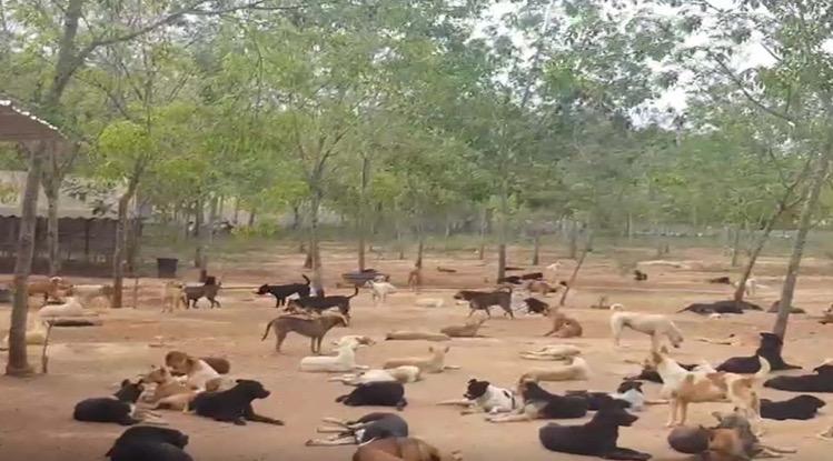 De zwerfhonden opvang in Pattaya is op de fles gegaan