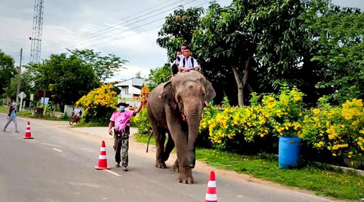 Kinderen in Surin mochten op de eerste dag van de school opening op een olifant naar school komen