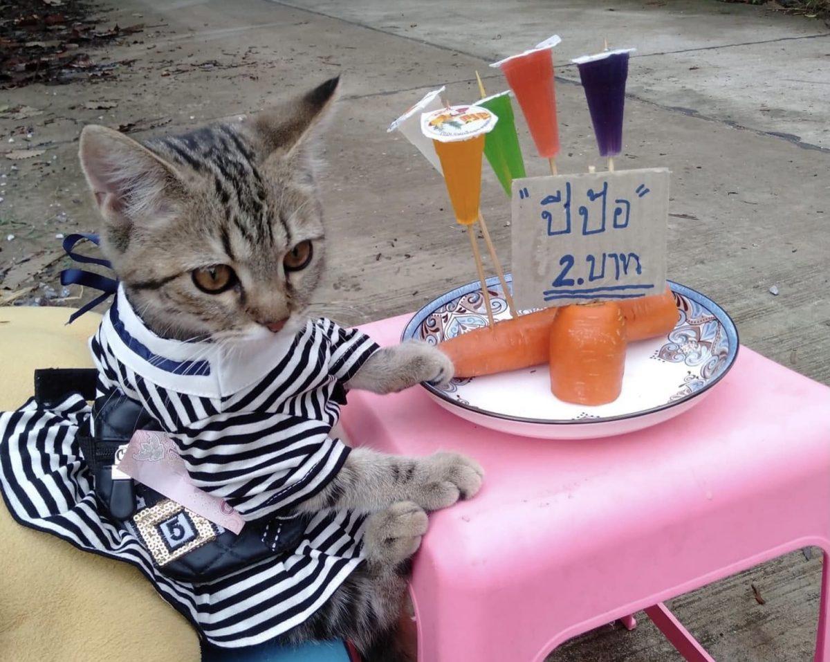 Bong Bong de kat in Thailand verkoopt haar straatvoedsel in aandoenlijke pakjes, en weet binnen 3 dagen 30.000 volgers aan haar te binden