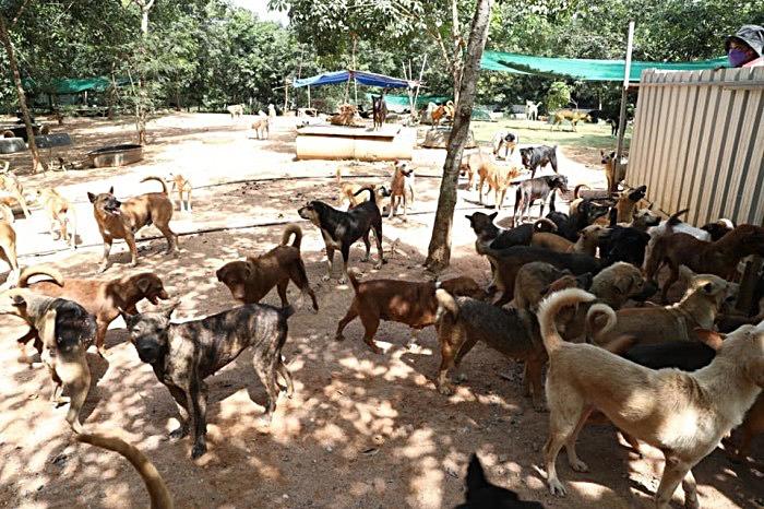 Het dierenasiel Ban Klongyai in Pong onder stadsbeheer van Pattaya gesteld