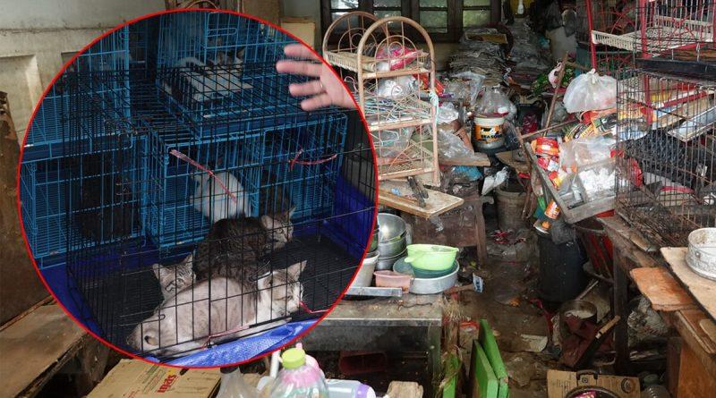 Honderden verwaarloosde katten gevonden nadat dorpelingen klagen over stinkend huis