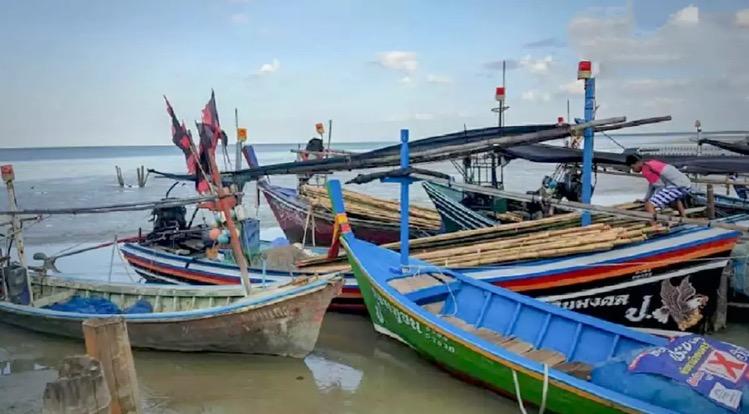 De CSO coalitie wilt dat Thailand stopt met de verkoop van jonge vis, om het uitsterven van vissoorten te voorkomen.