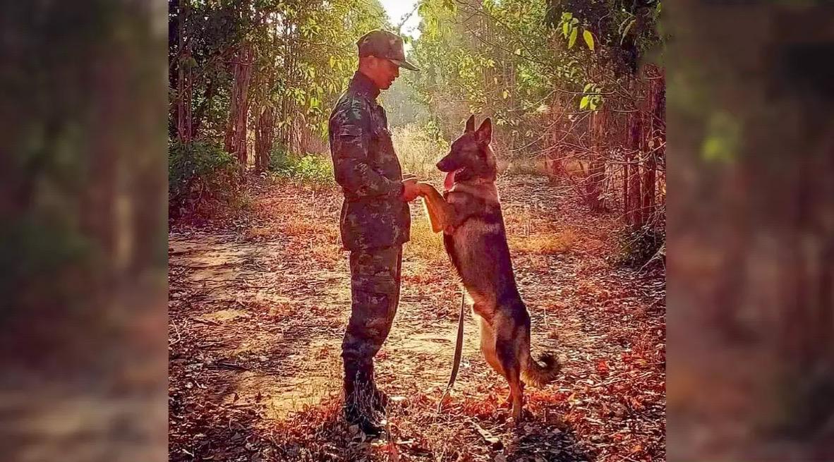 De legerhond Lohan verkeert in goede conditie ondanks schotwond tijdens schermutselingen met opstandelingen