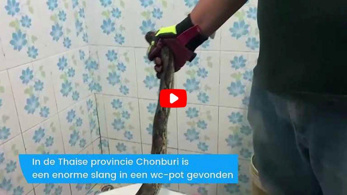 VIDEOCLIP | Onverwacht toiletbezoek doet Thaise vrouw in Chonburi huiveren