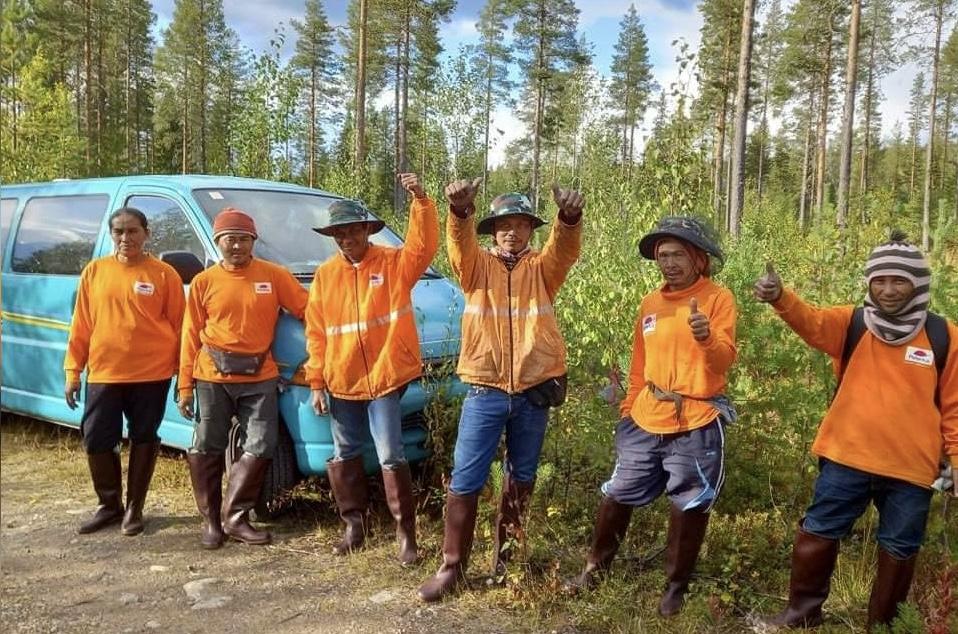 Sommige Thaise bessenplukkers verdienen tijdens één seizoen in Finland het salaris wat gelijk staat aan 15 jaar salaris