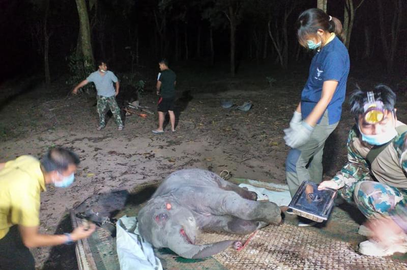 Jonge olifant in Prachinburi tijdens het oversteken van de weg omgekomen