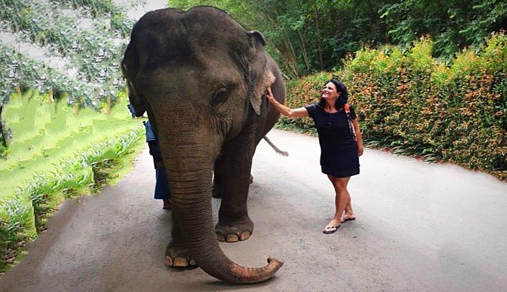 """Olleke Bolleke in gesprek met de stuwende kracht achter de """"De Elephant Parade""""…. Jeannette Woelinga"""