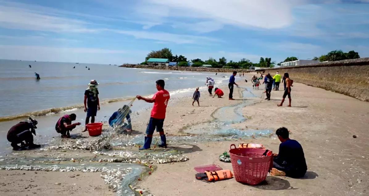 De bevolking van Cha-am kan zich gratis tegoed doen aan heerlijke schaal en schelpdieren welke de zee gratis uitspuwt
